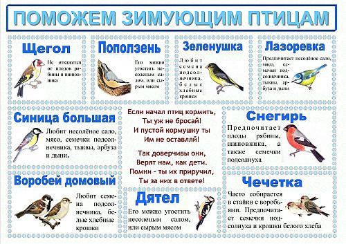 Картинки зимующих птицах для детей